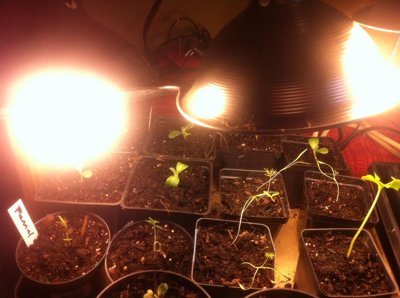 seedtrays