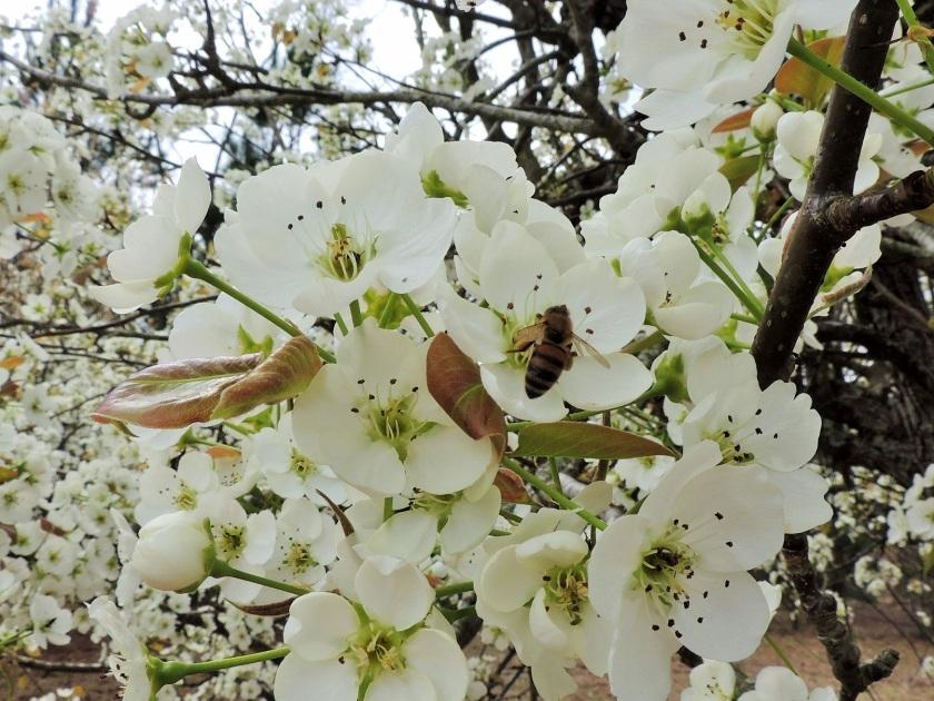 beesgone